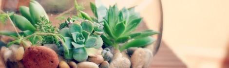 Terrário das suculentas mutantesTerrarium of the mutant succulents