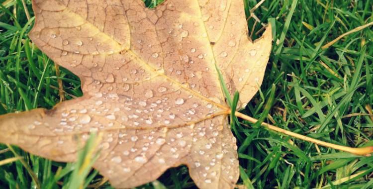 Da chuva, para o Verão eterno