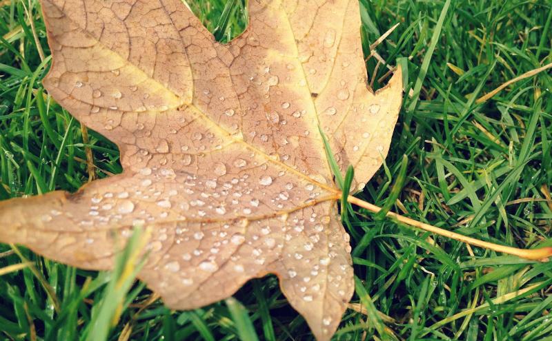 Mudanças: da chuva, para o Verão eterno