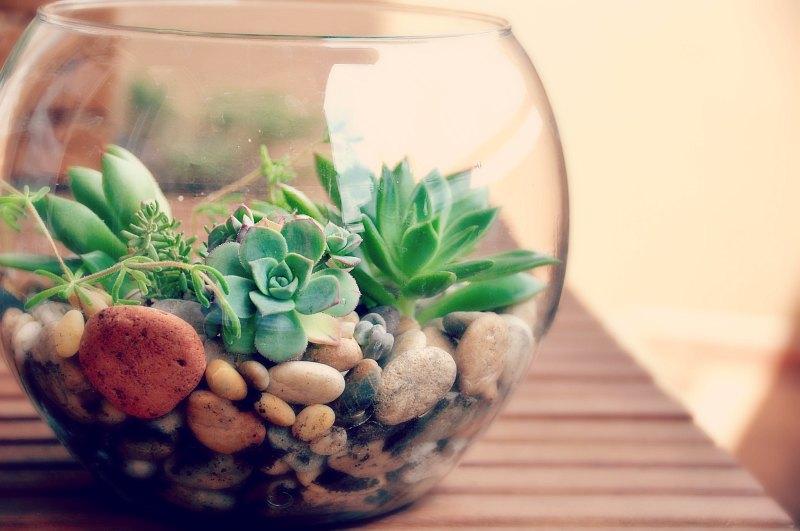 Suculentas: plantas que se multiplicam